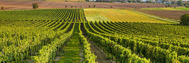 Carbure pour matériel viticole JPF CARBURE